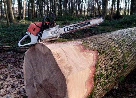 Travaux forestiers abattage à Montdidier