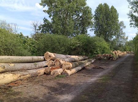 Travaux forestiers débardage à Montdidier