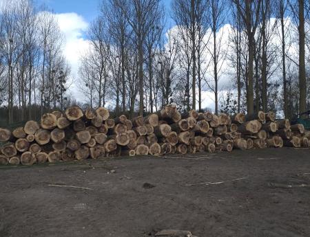 Vente de bois à Montdidier Scombart